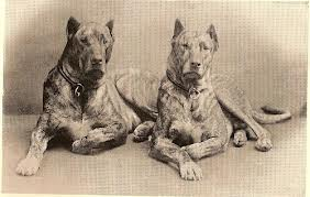 Goliath: Vintage Great Danes - an amazing change