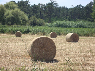 Hay Bales Cilynder in a field photo - Monte Real - Leiria