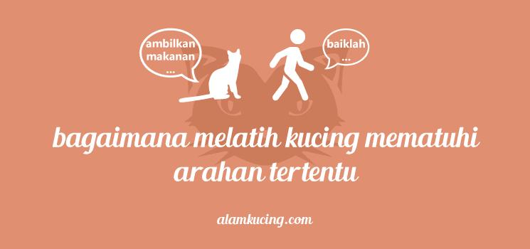 Bagaimana mengajar kucing kemahiran tertentu