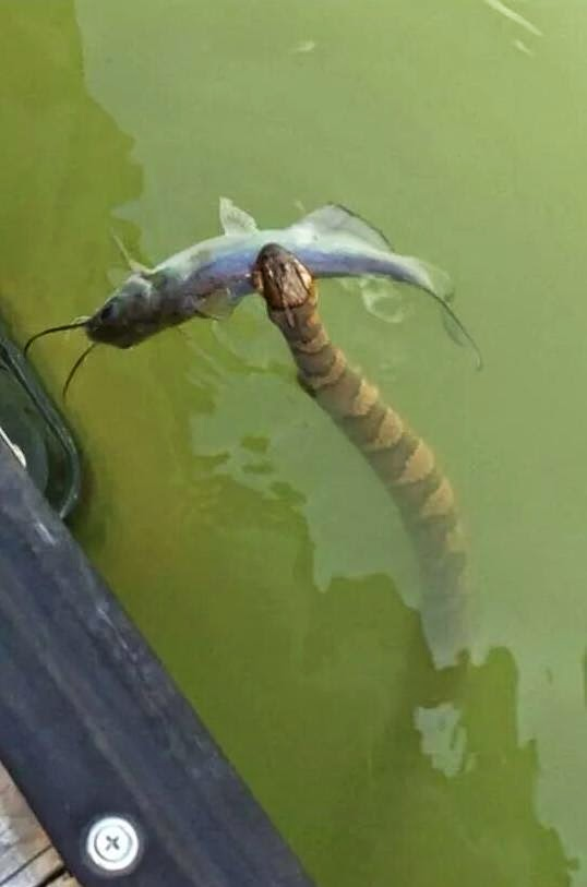 Yılan Balığı Mı desem ne desem bilemedim
