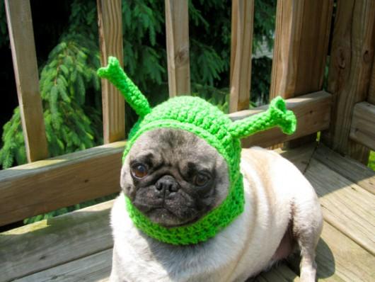 Lustige Bilder Hundebabys - Hunde Bilder, Jappy & Facebook GB Pics, Gästebuchbilder