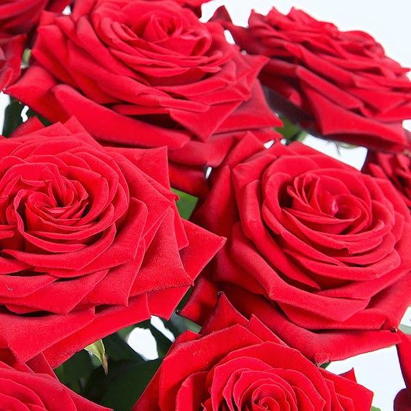 Valentines day Rose Flowers gifts and price