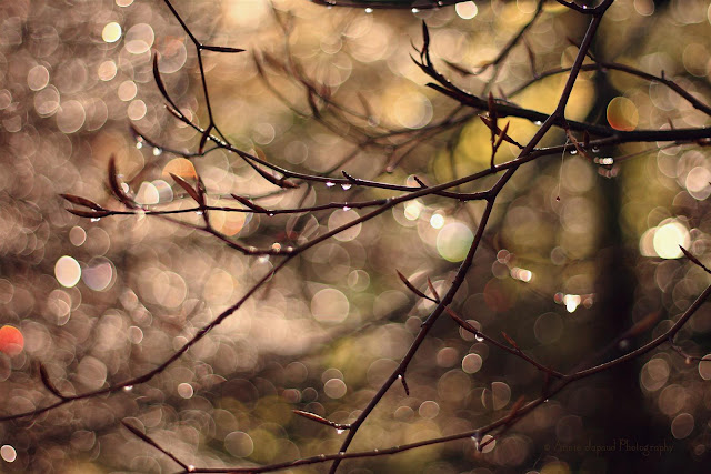 golden sunlight and branches sparkling with raindrops