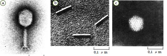Ciri dan Struktur Virus