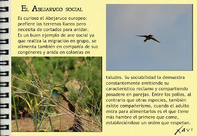 Cuadernos de campo- Javier Pérez