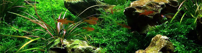 Best Freshwater Fish for Planted Tank - Aquarium Aquascaping