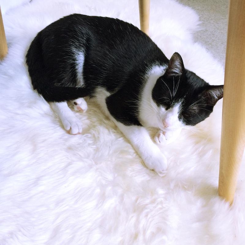 chat qui fais dodo