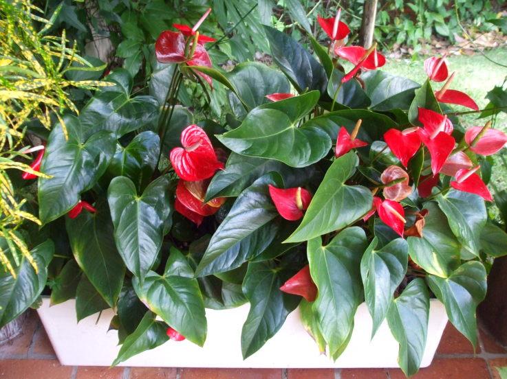 Ateli milla artes dicas plantas resistentes ao sol - Planta de exterior resistente ...