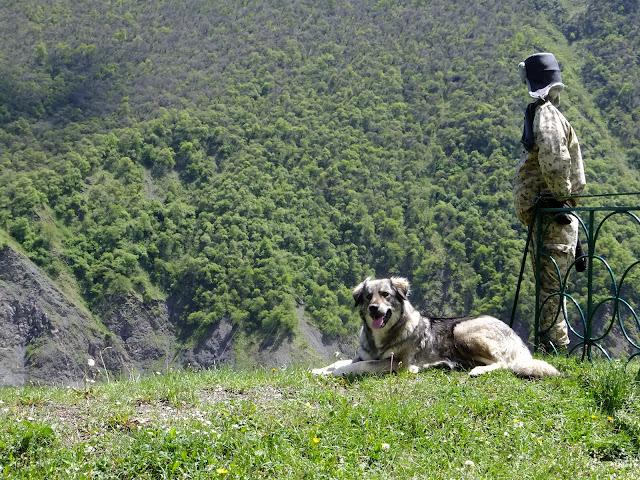 Кавказская овчарка на пограничном посту