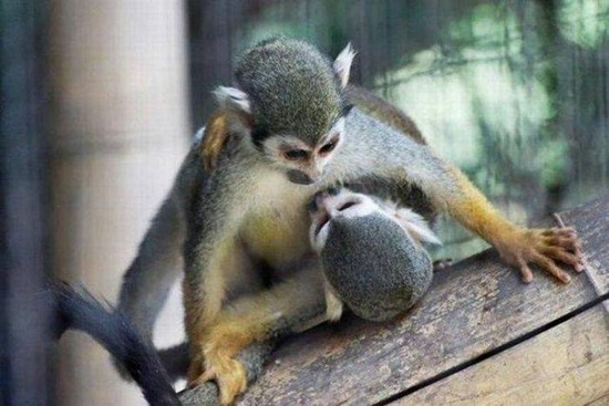 funny animal love
