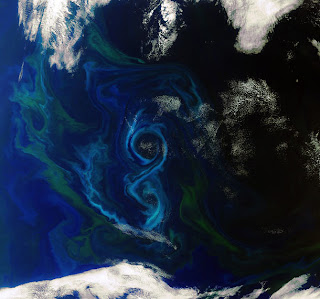envisat phytoplanktonbloom Envisat captures image of a phytoplankton bloom
