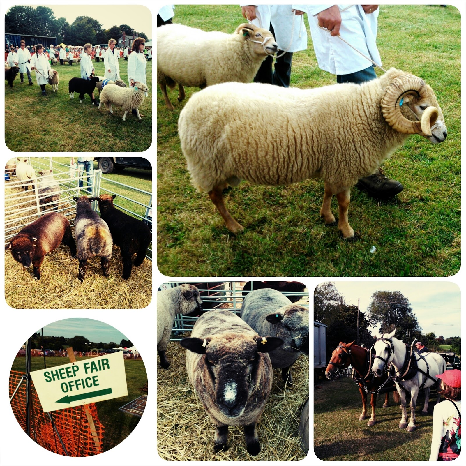 Findon Sheep Fair's most beautiful