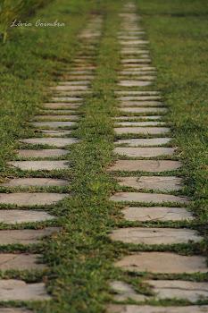 """""""É caminhando que se faz o caminho..."""""""