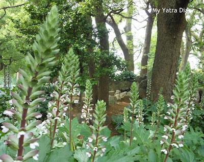 Beautiful flowers at Hibiya Garden - Tokyo, Japan