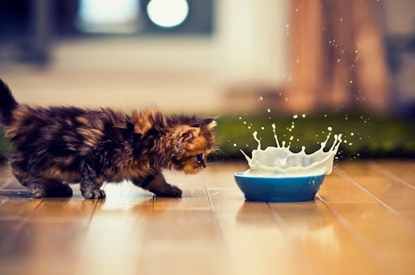 http://www.funmag.org/pictures-mag/animals-and-birds/cute-kitten-daisy/