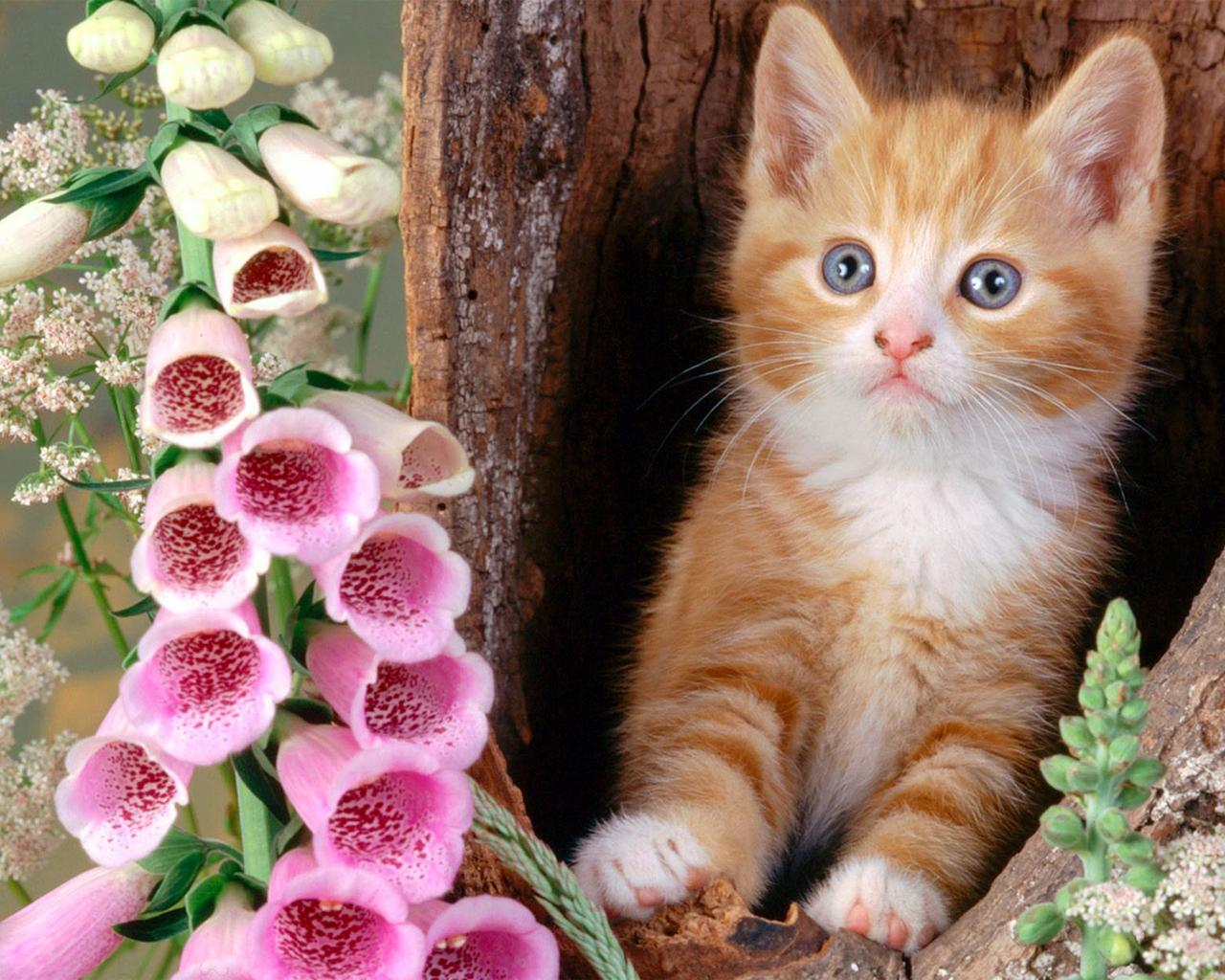Beautiful cats hd wallpaper
