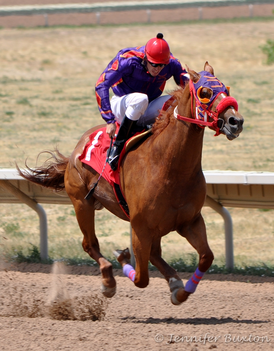 Quarter Horses  6666 Ranch