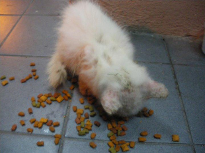 S C R A T C H Shiro Si Kucing Putih Yang Di Buang Manusia