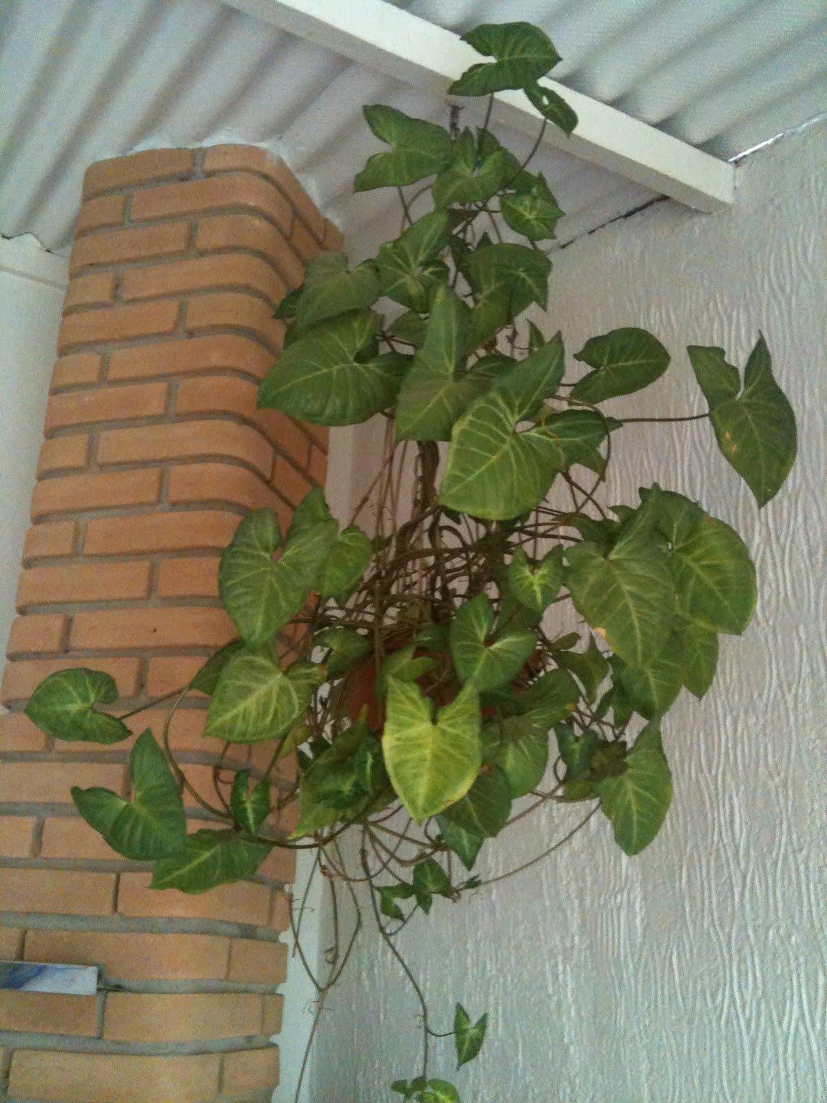 Verde jardim mais plantas para interiores - Plantas de agua para interiores ...