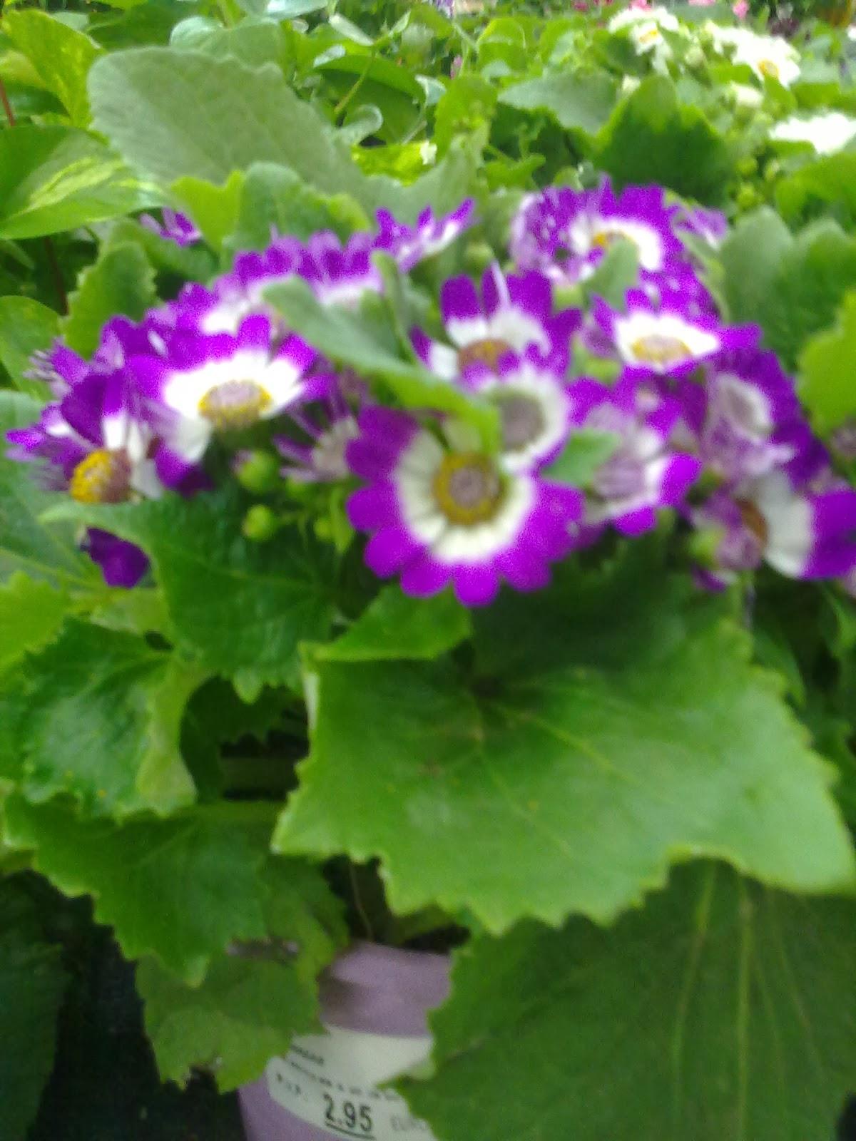 Jardines angelo flores para primavera y verano for Plantas de invierno para interior
