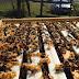 Almanya üretimi Damızlık Karniyol ve F1 Ana arı Satışlarımız devam ediyor...
