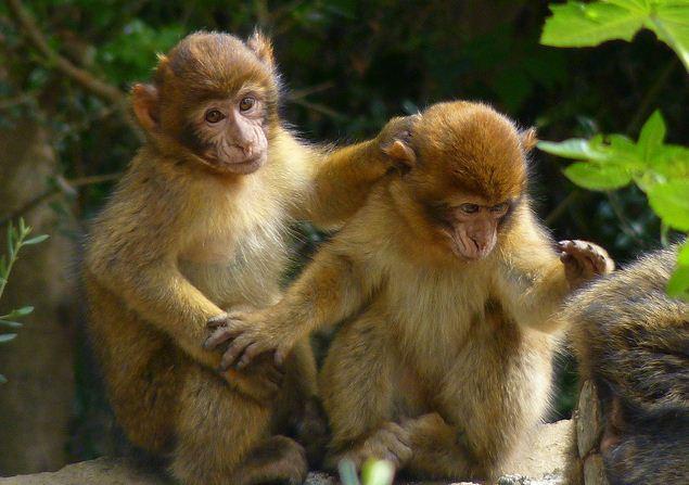 Article plus r cent article plus ancien accueil - Le singe d aladdin ...
