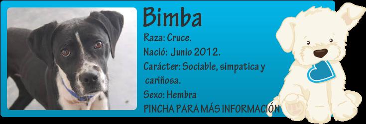 http://mirada-animal-toledo.blogspot.com.es/2014/03/bimba-8-meses-atada-una-cadena-de-un.html