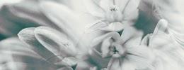 http://i757.photobucket.com/albums/xx217/carllton_grapix/blogtexturecarllton22.jpg