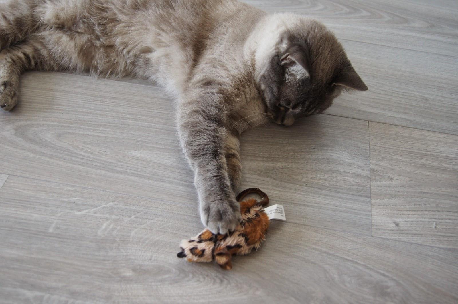 chat qui joue avec une souris