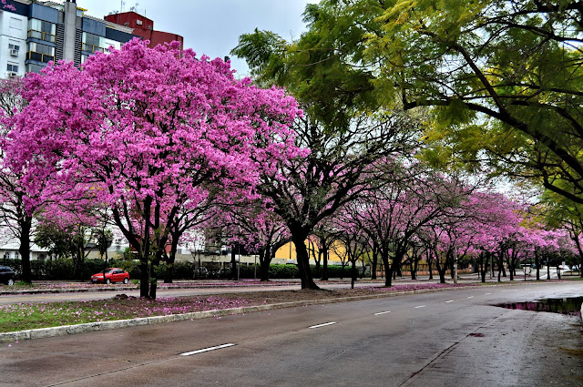 Primavera em Lisboa