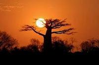 Sol de África