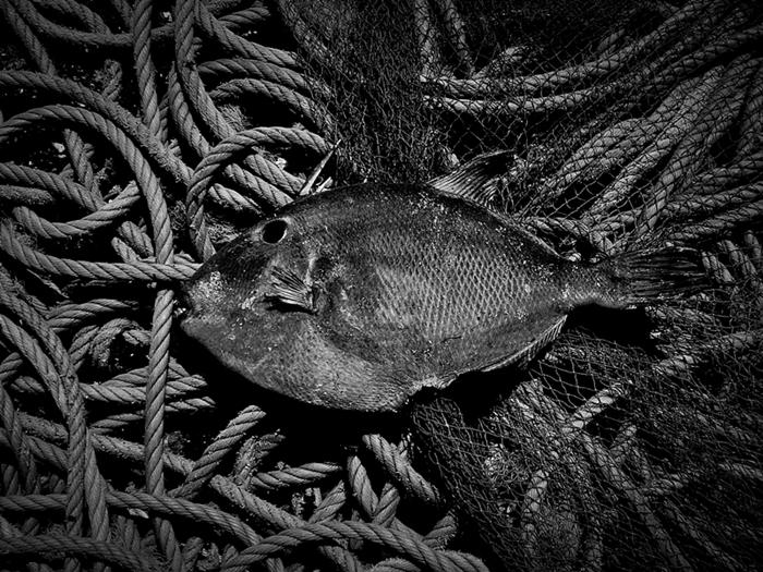 fotografia de peixe morto, fotografia de redes