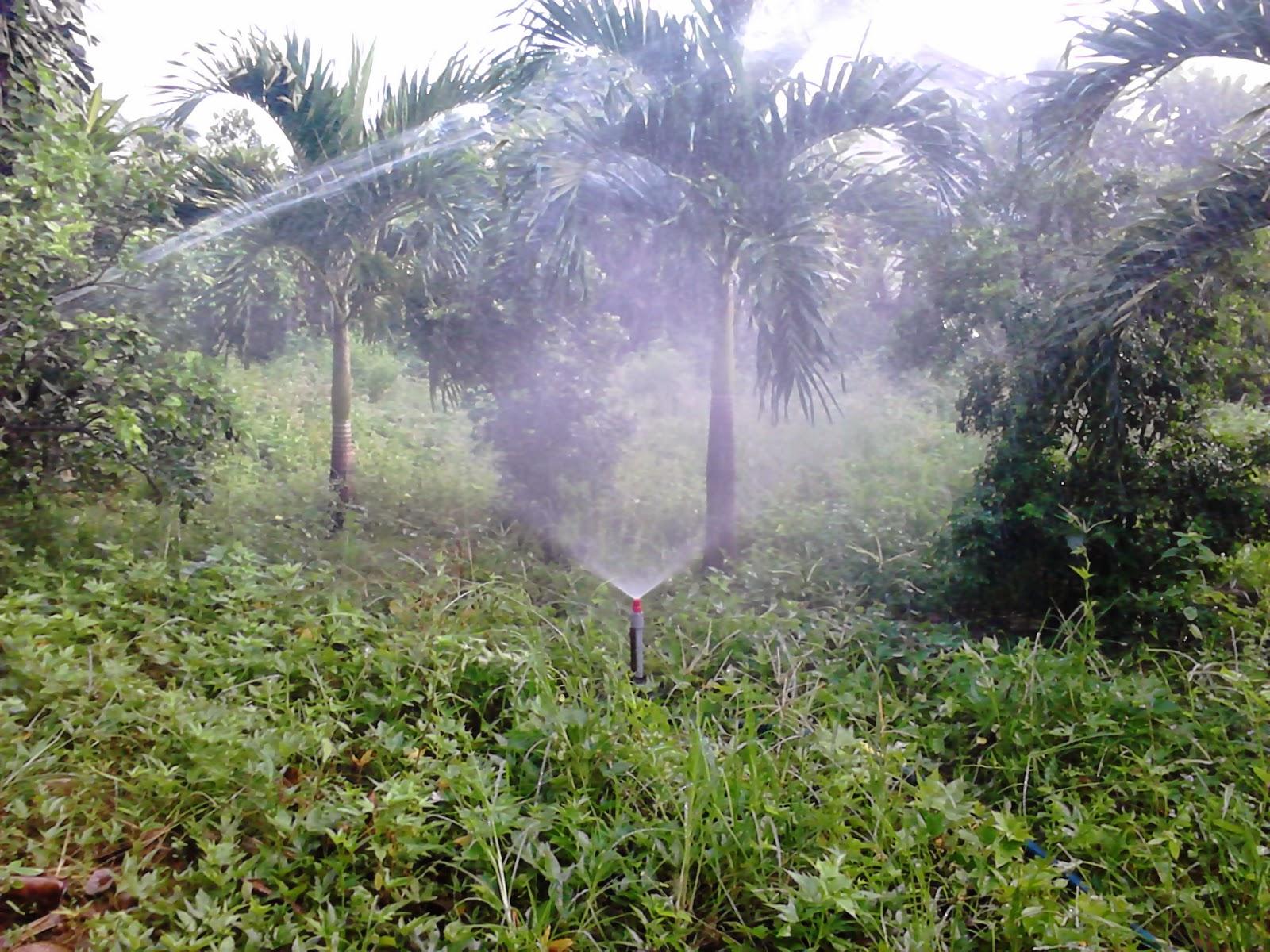 béc tưới cây tự chế của người Việt