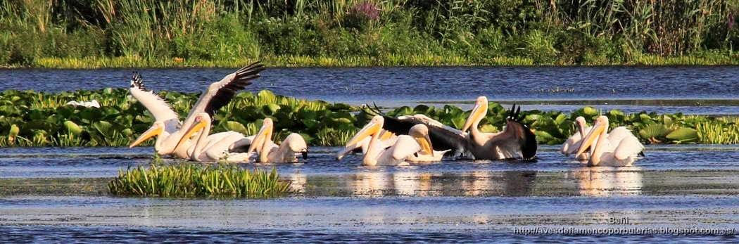 Fotografía de aves en el delta del Danubio (Rumanía).