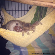 Now here is a sloth in a hammock that will brighten anyone's Monday morning sloth hammock