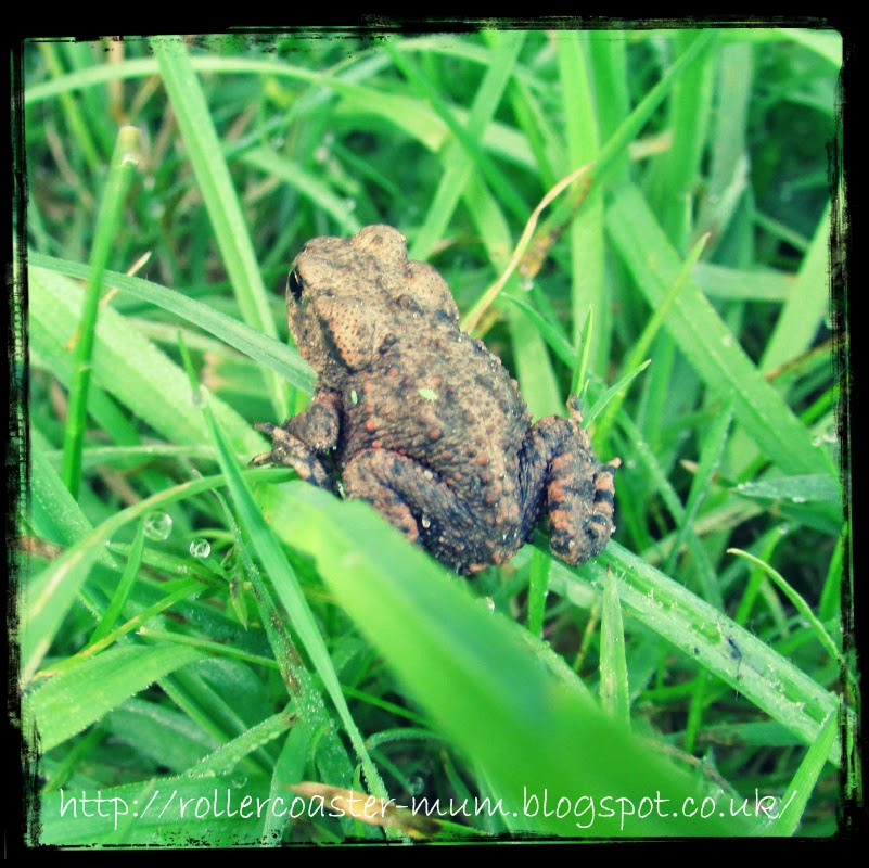 #alphabetphoto, F is for Frog, froglet