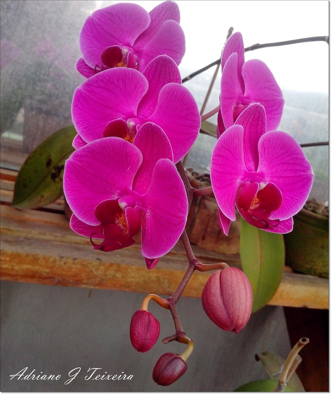 Imagens De Flores Lindas Orquideas - 12 Maravilhosas Fotografias de Orquídeas e Pensamentos