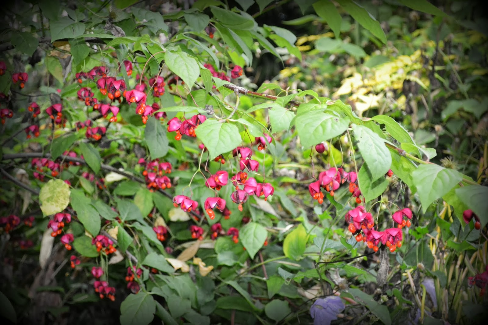Temperate forest plants names - photo#18