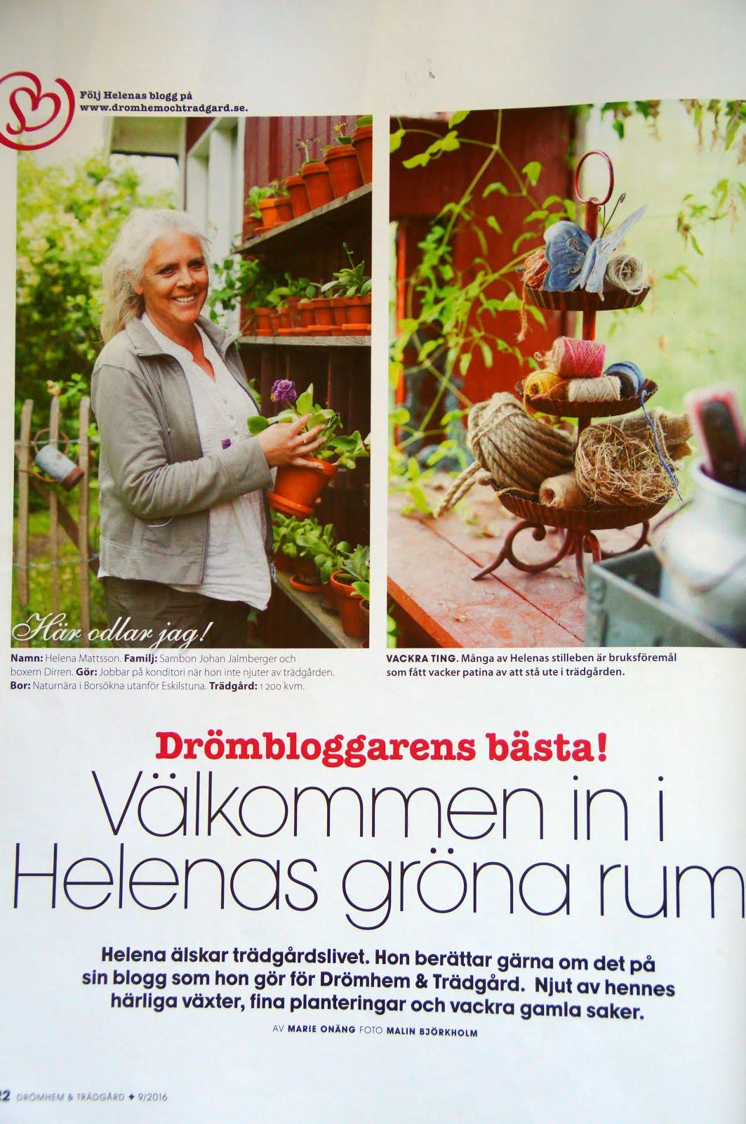 Reportage i Drömhem & Trädgård