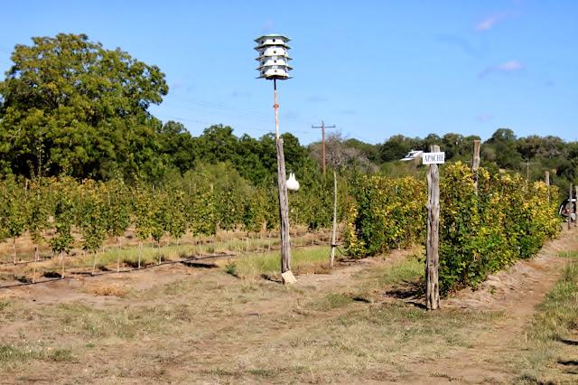 Rock Oak Deer Love Creek Apple Orchard