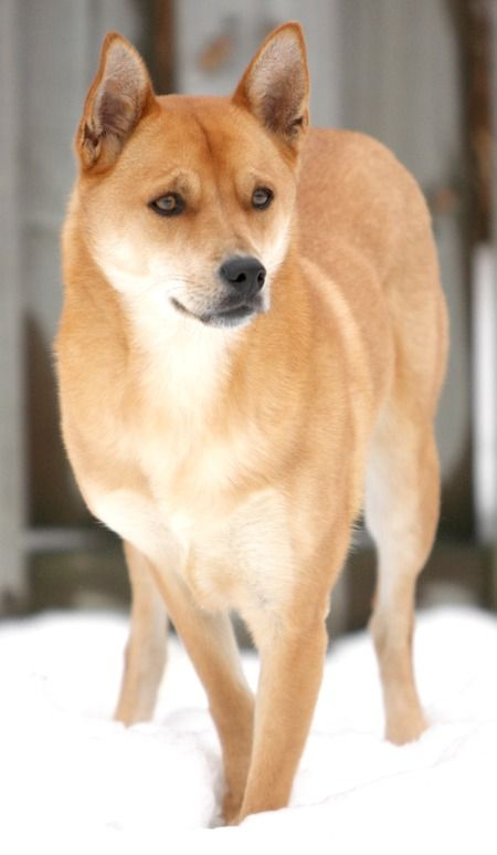 Central Carolina Dog Training
