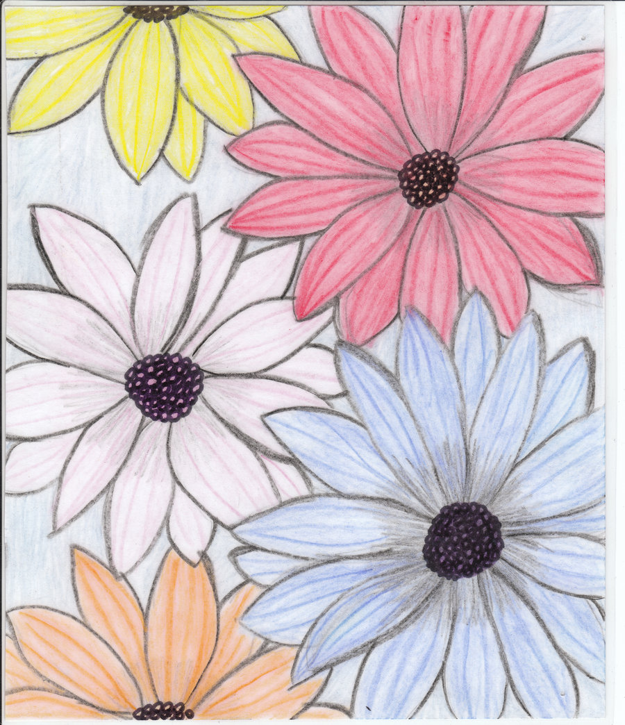flowers for flower lovers flowers drawing