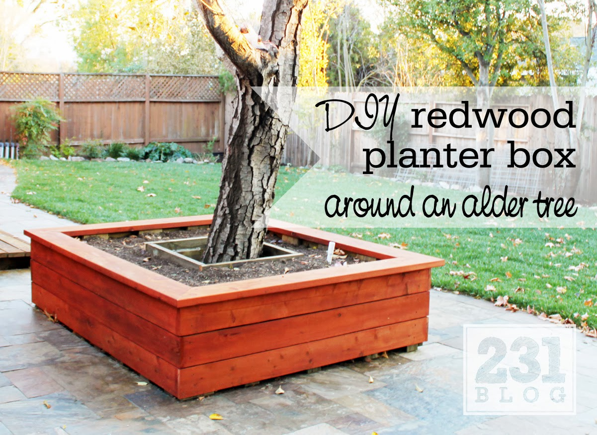 Trees in Planter Boxes Planter Box With Seating