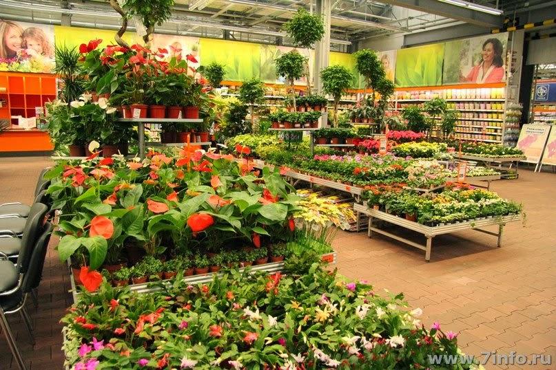 Сад и огород владивосток