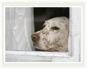 Dog Separation Anxiety Treatment ala Cesar Millan