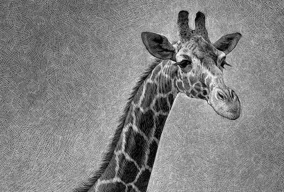 09-Giraffe-Detail-Ricardo-Martinez-Wild-Animals-inside-Scratchboard-Drawings-www-designstack-co
