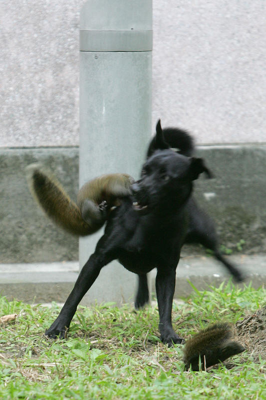 Squirrel Mom To The Rescue Amazing Creatures