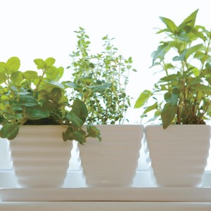 Superior D.I.Y. Window Sill Herb Garden