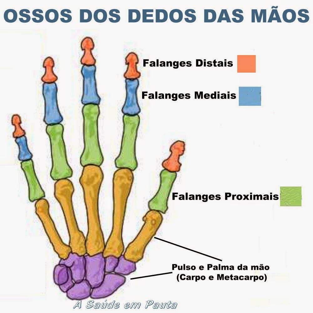 Nomes e localização dos ossos dos dedos das mãos