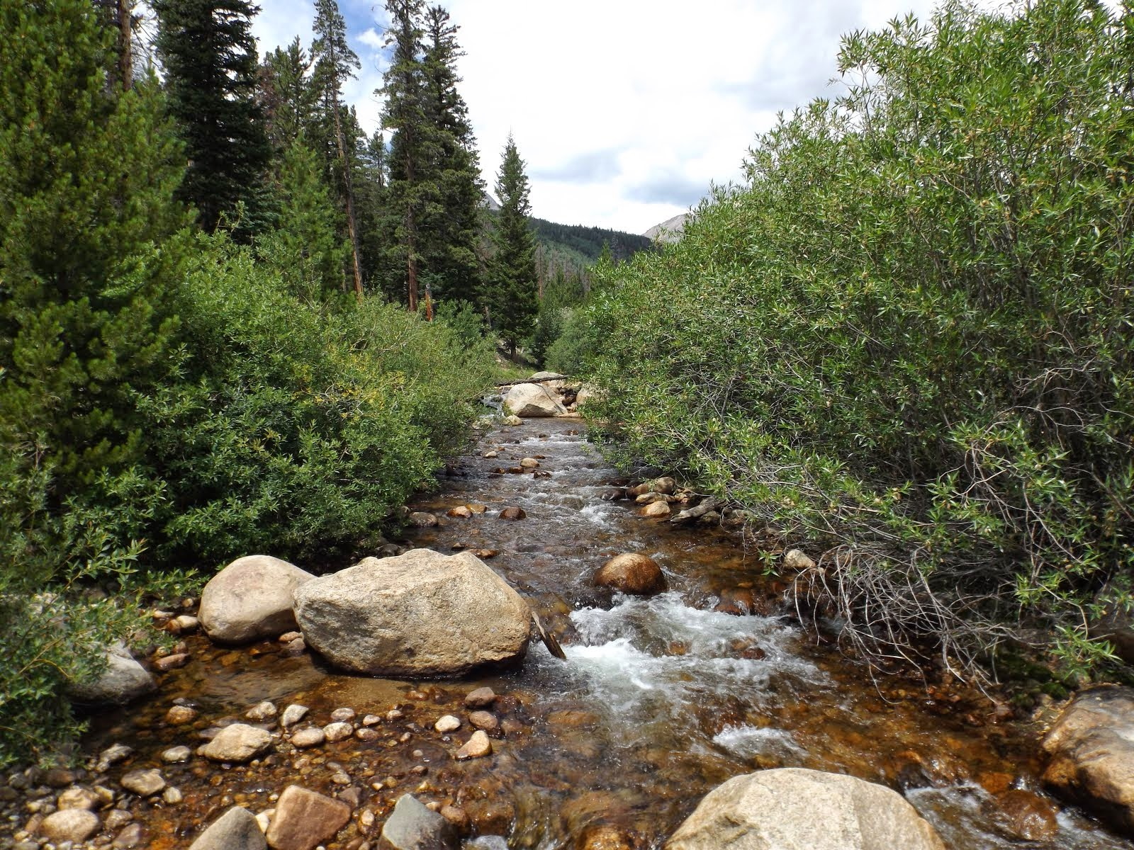 Rocky mountain fly angler for Roaring river fishing hours